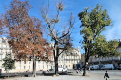 Bordeaux photo des arbres malades de la place Pey Berland | Photo Bernard Tocheport